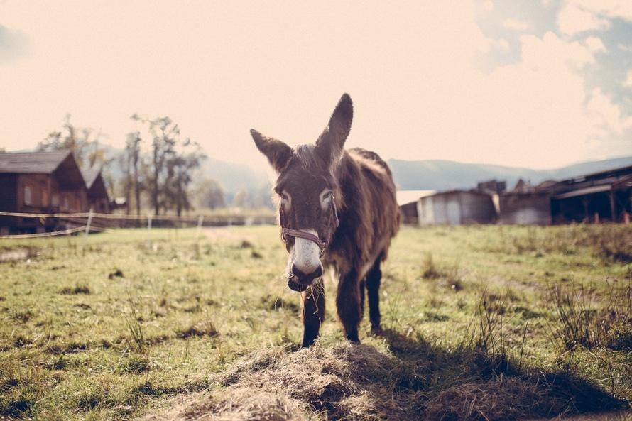 L'âne du petit Nicolas ou le secret de la tombola