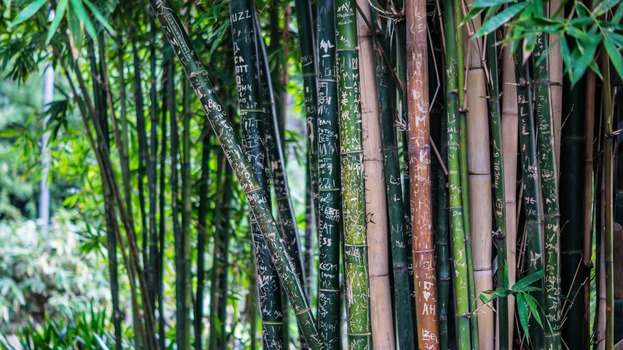 Le leçon du bambou chinois