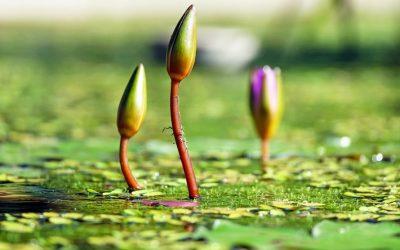 La conscience mentale : notre 6ème sens