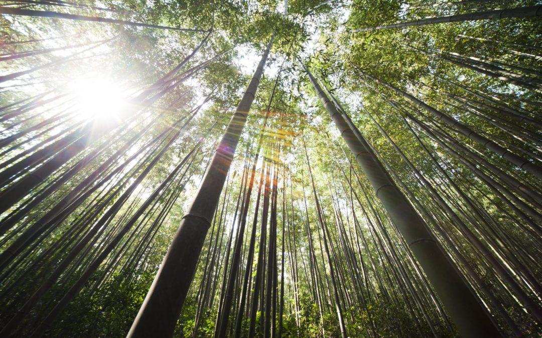 La fougère et le bambou